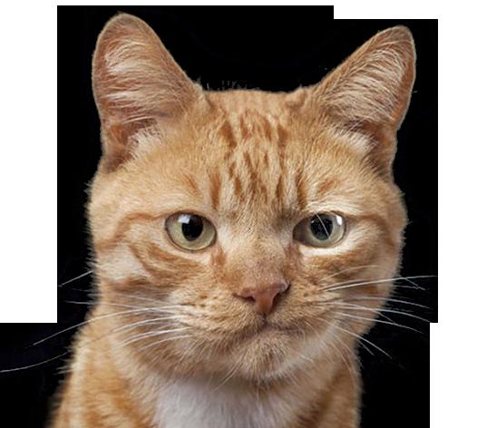 Sad face cat